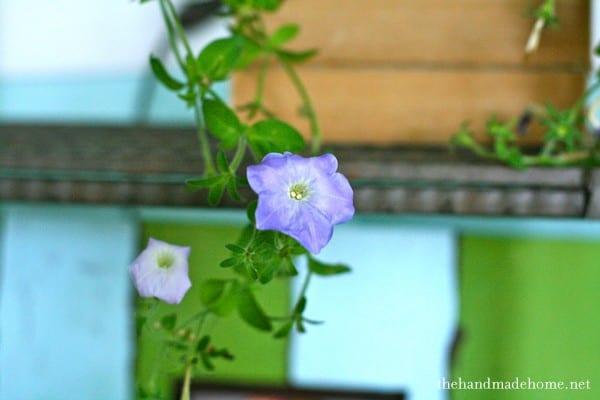 veranda_redo