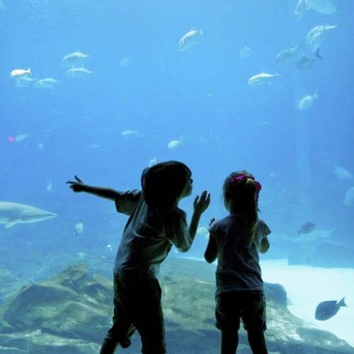 the georgia aquarium, lego land, epical moments and death by spork.