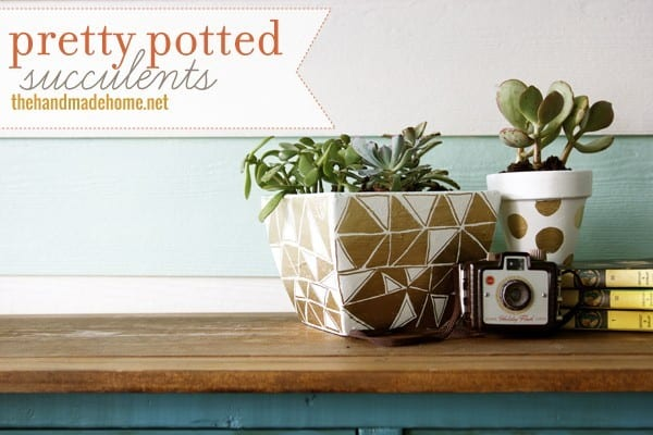 pretty_potted_succulents