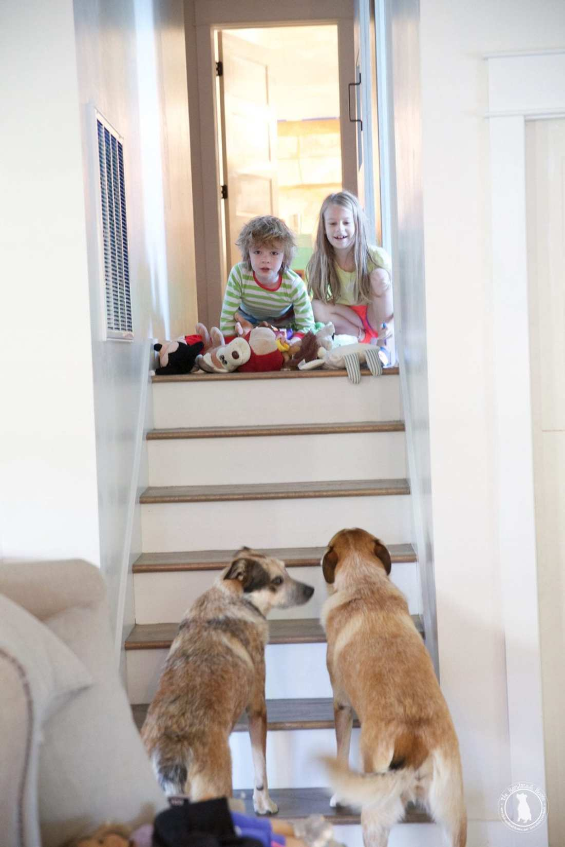 stairwell_and_dogs