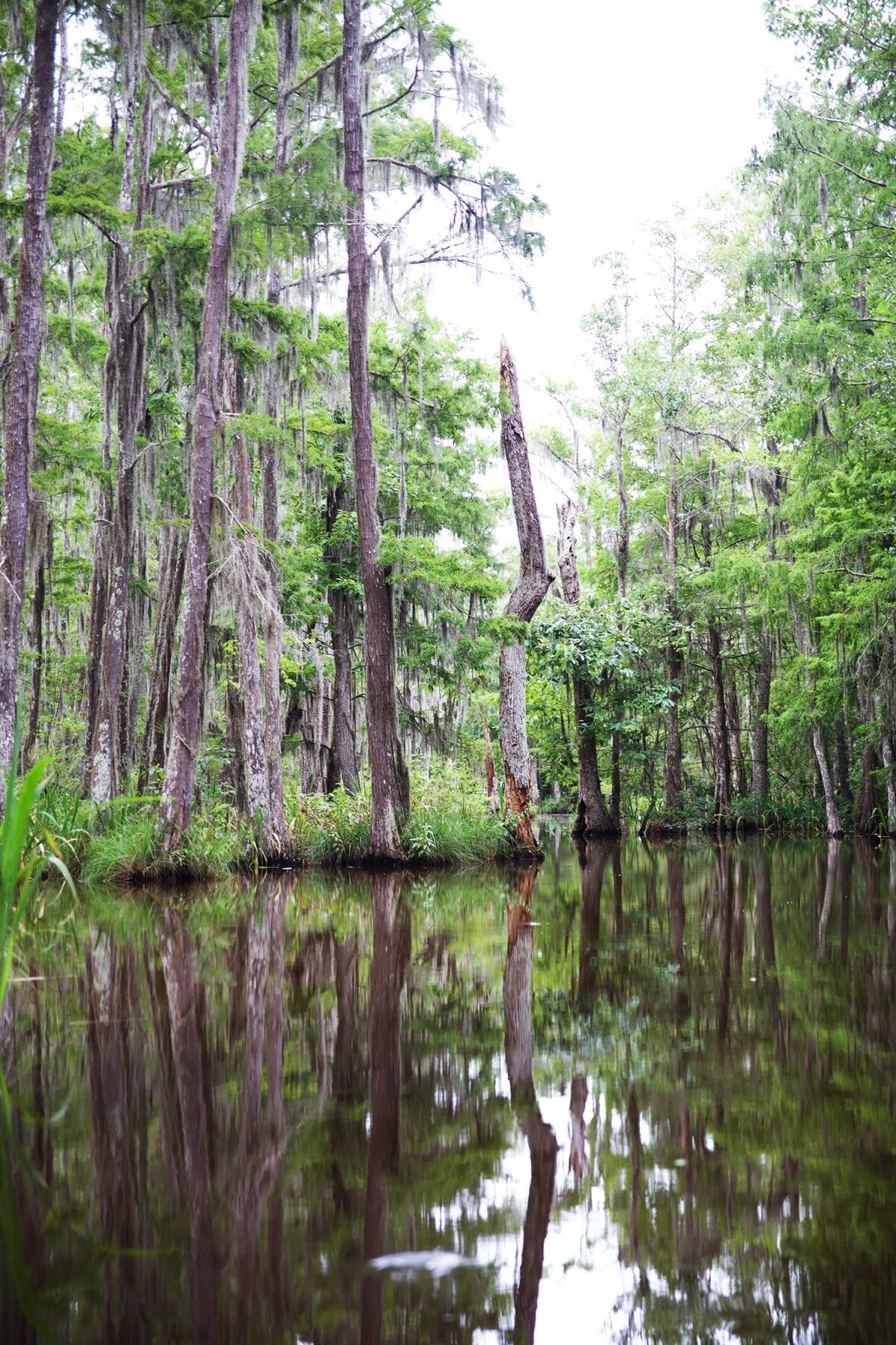 Things to do in New Orleans - swamps
