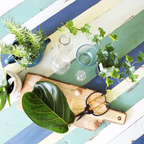 propagating plants {simple indoor water garden}