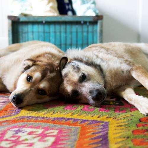the dog alarm