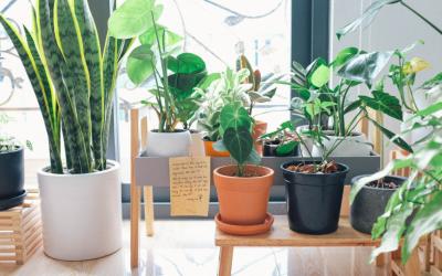 How Indoor Plants Benefit Your Life