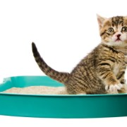 Product Review: Cat Litter Types & Tips | The Happy Beast