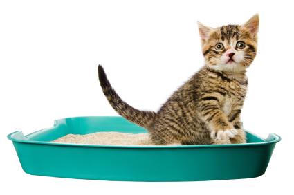Kitten in a litter box reviewing different types of cat litter.