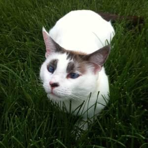 Indoor vs. Outdoor Cats: Benefits & Risks | The Happy Beast