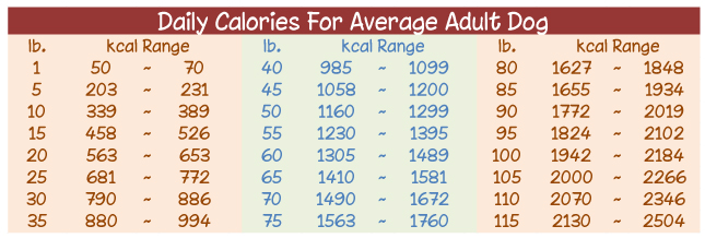 Daily Recommended Calories for an Average Adult Dog