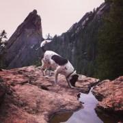 Dog Hiking Gear & Tips | The Happy Beast