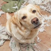 Separation Anxiety in Dogs: Behaviorist's Approach | The Happy Beast