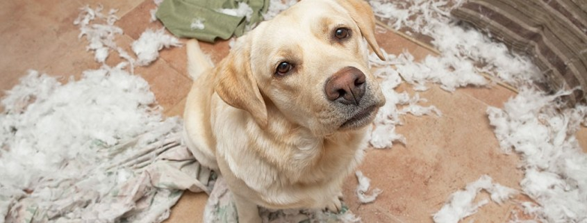 Separation Anxiety in Dogs: Behaviorist's Approach   The Happy Beast