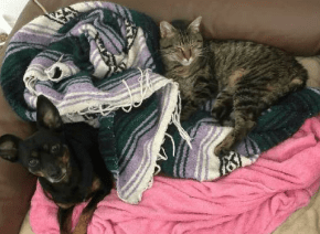 The Happy Beast foster cat Dottie