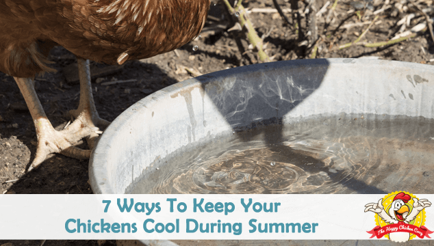 7 Ways To Keep Your Chickens Cool During Summer Blog Cover