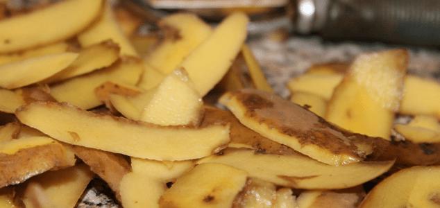 Feeding chickens potato peel
