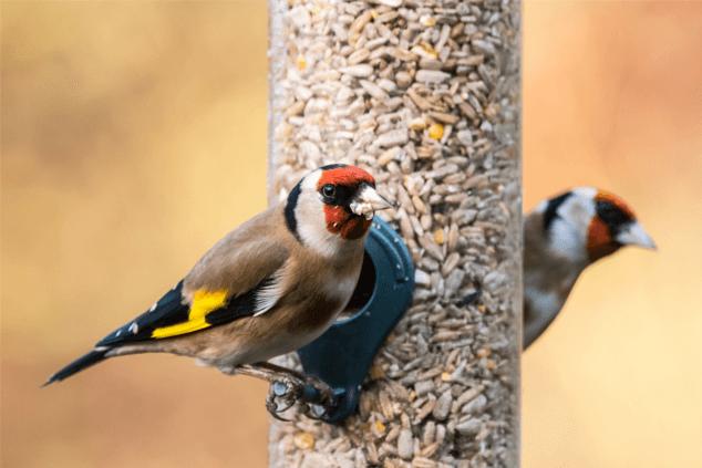 Don't Feed Wild Birds