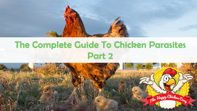 The Complete Guide To Chicken Parasites Blog Cover