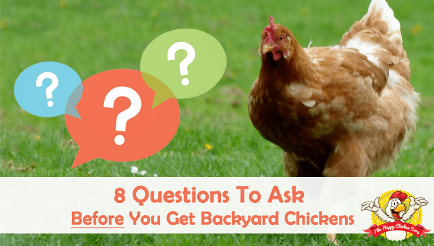 8 Questions To Ask Yourself Before You Get Backyard Chickens Blog Cover