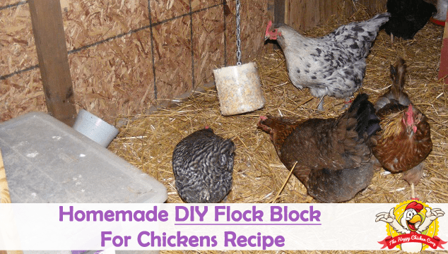 Homemade DIY Flock Block For Chickens Recipe Cover Image