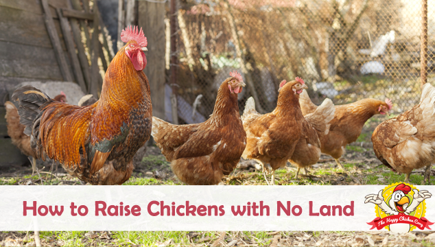 Raising Chickens with No Land Blog Cover