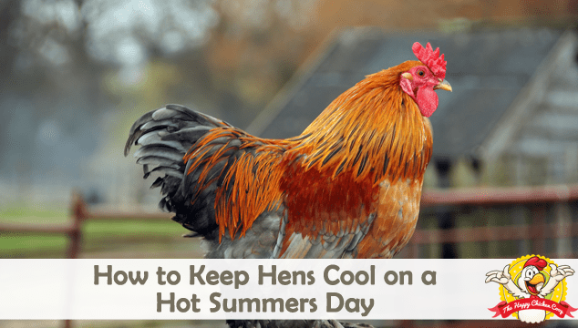 How to Keep Hens Cool on a Hot Summers Day Blog Cover