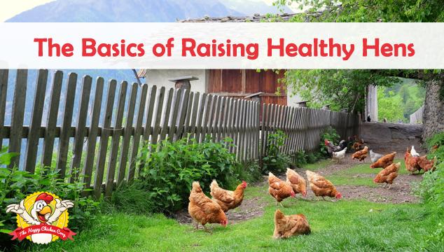 The Basics of Raising Healthy Hens
