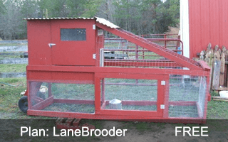 LaneBrooder