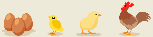 Egg to Chicken