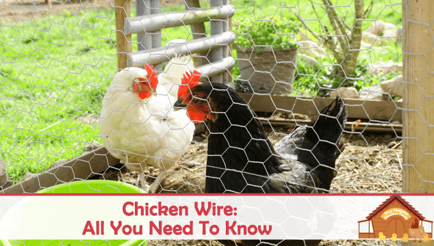 Chicken Wire All You Need To Know Blog Cover