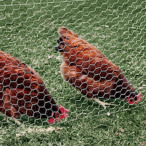 Yard Guard Netting