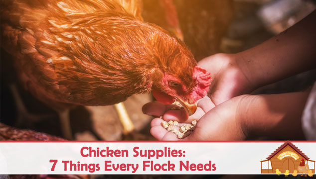 Chicken Supplies 7 Things Every Flock Needs Blog Cover