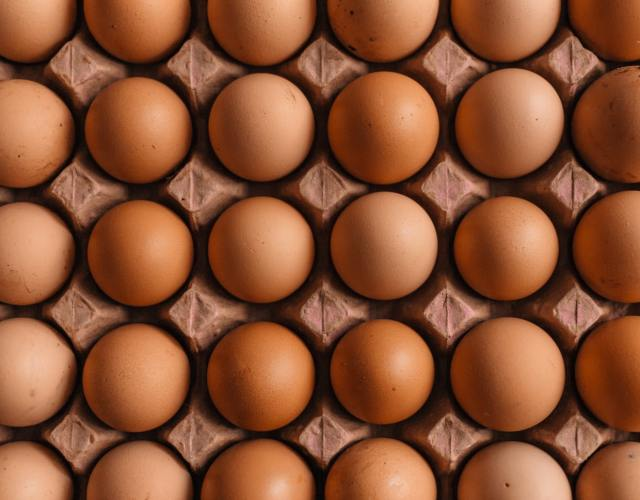 chicken breeds that lay the largest eggs