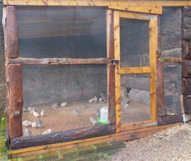 recall quail cage