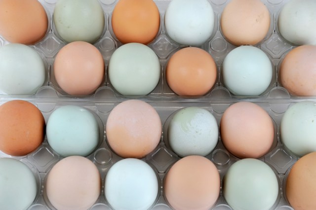 chicken egg colors