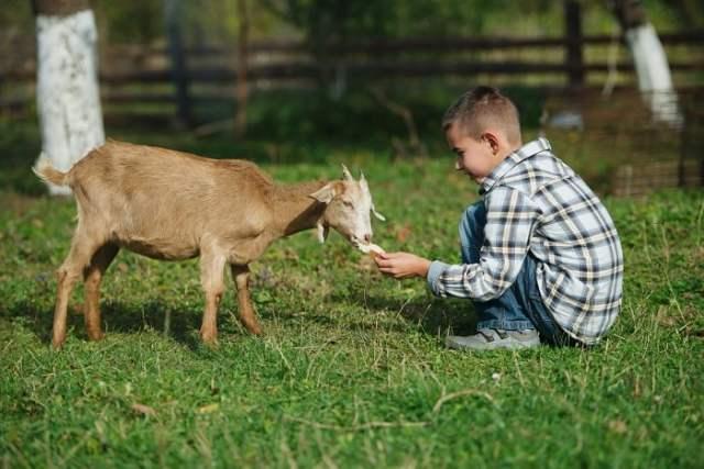 Ultimate Goat Feeding Guide