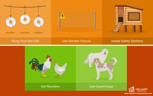 Keeping Your Chickens