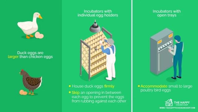 Incubate Duck Eggs