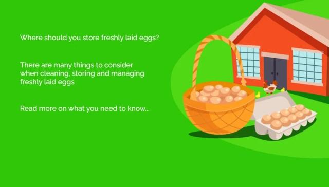 store freshly laid eggs