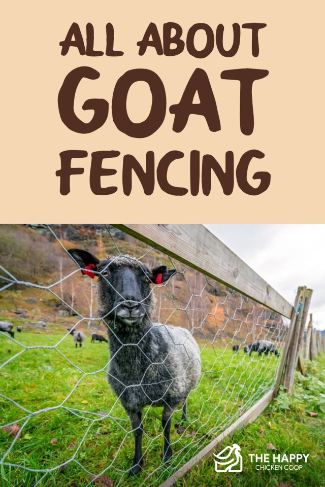 All About Goat Fencing