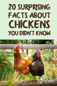 20 Surprising Facts About Chickens You Didn't Know