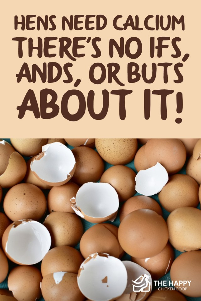 Hens Need Calcium - There-s No Ifs, Ands, or Buts About It-