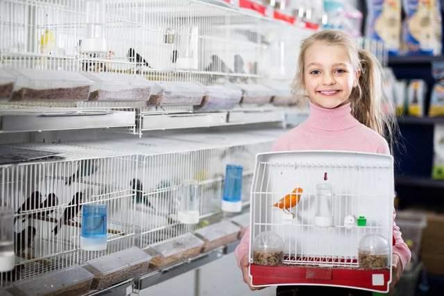 pet bird for children