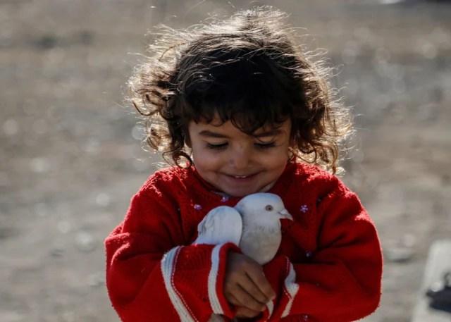 pet birds and children dove