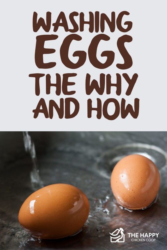 Washing Eggs - The Why And How