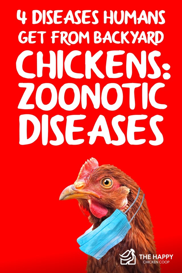 4 Diseases Humans Get from Backyard Chickens- Zoonotic Diseases