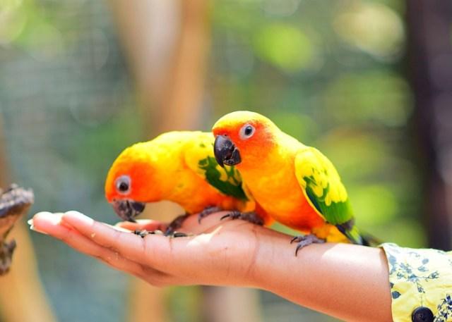 Diet tip for beginner bird owners