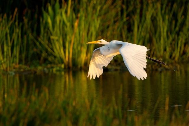 photographing birds