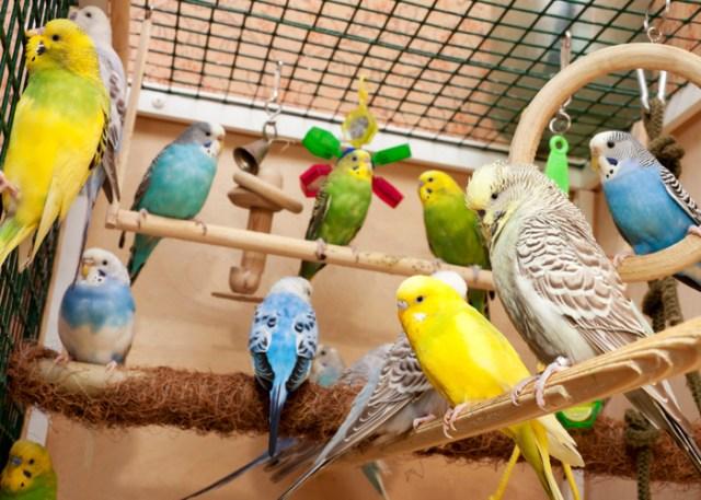 Pet bird options for beginner bird owners