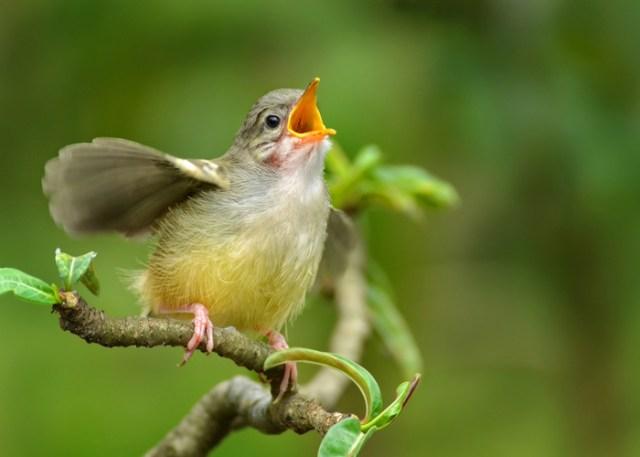 Beautiful singing bird