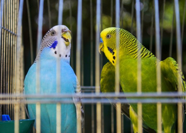 How to choose a bird cage