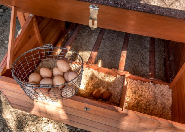 types of Chicken nesting boxes